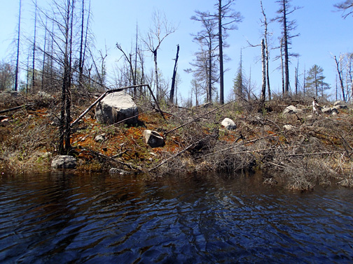 BWCA Lake One burned shoreline