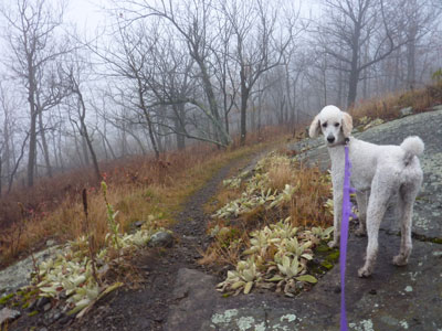 Fog dog: Before the storm