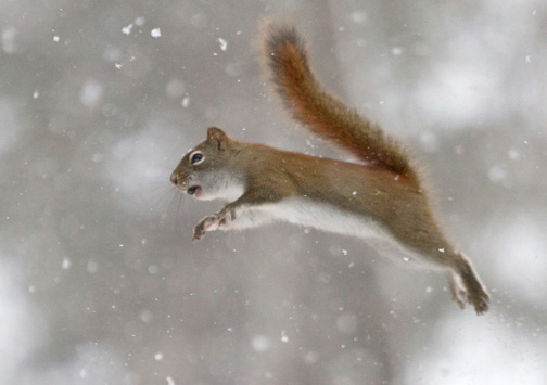 Don't miss Squirrel Appreciation Day at Gooseberry Falls State Park