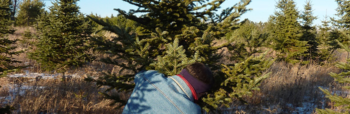 Where to cut your own Christmas tree